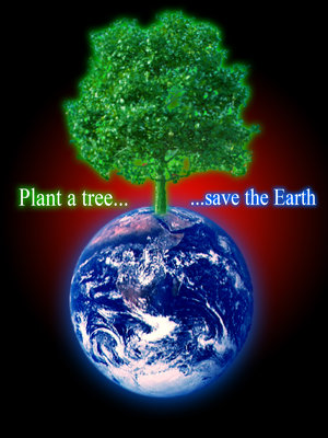 Save trees save the environment knowledge and culture english